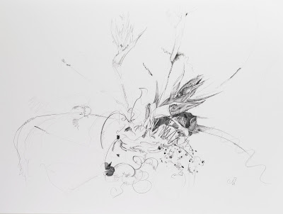 flower, birds of paradise drawing, graphite on vellum