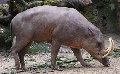 hewan yang di lindungi di indonesia