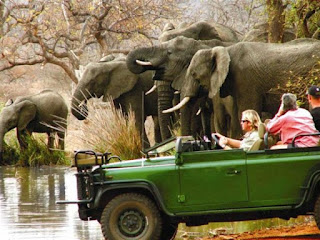 On Safari in South Africa - Where Africa's Wildlife Never Disappoints