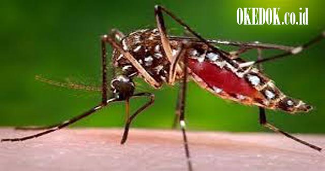 Basmi nyamuk