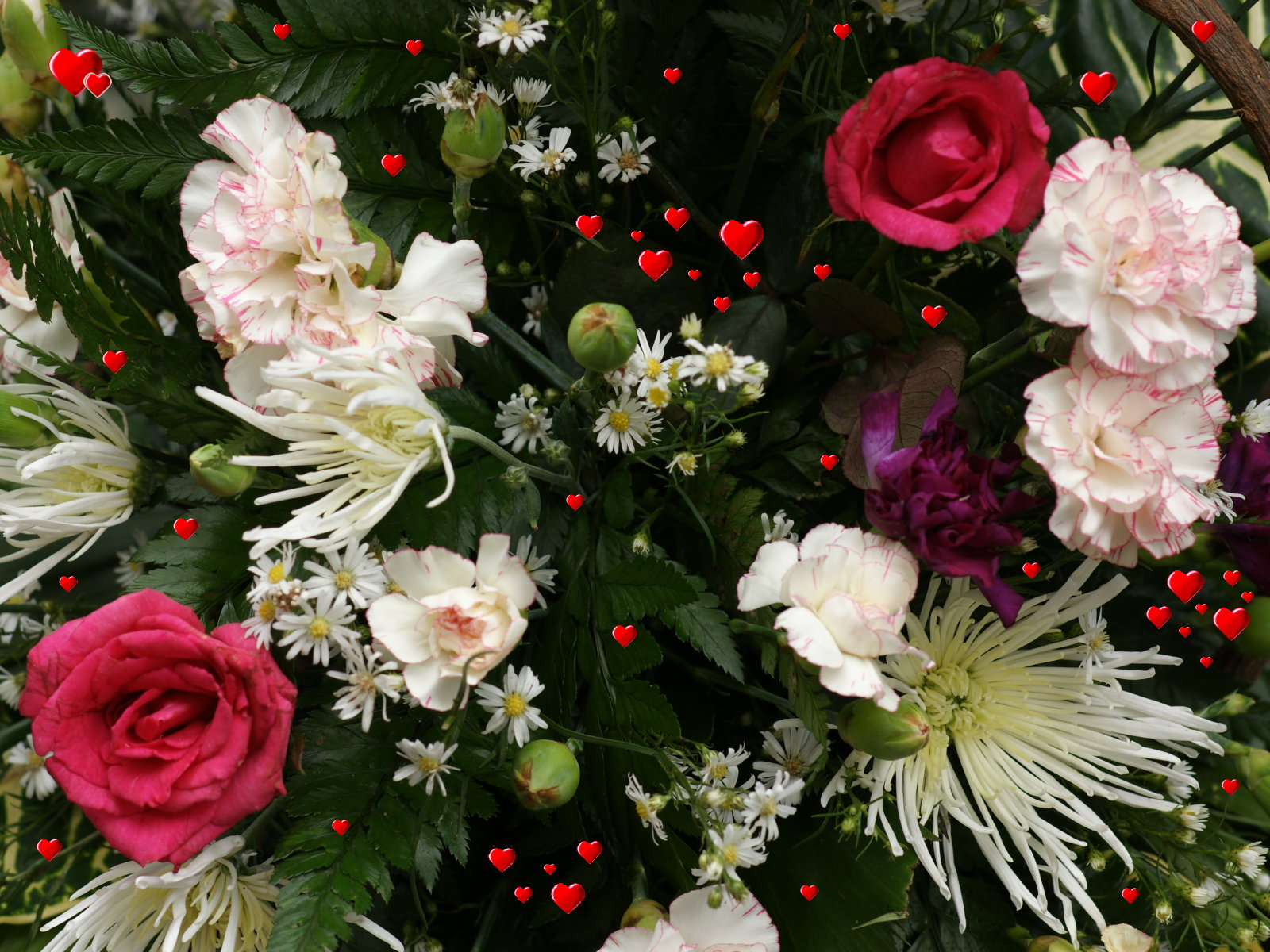 Acacia Flowers Plants
