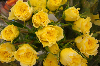 शरण म सभ बत Yellow Rose Pic Free Download