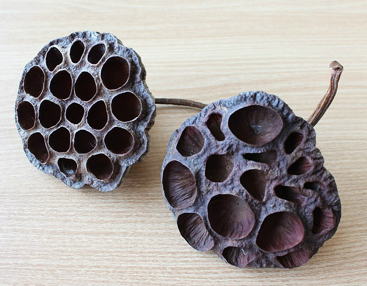 Pincushion of Lotus Seed Head. Игольница