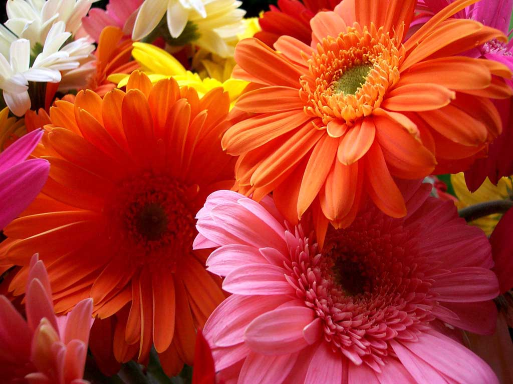 15 Beautiful Scenery Pictures Flowers Images Top Collection Of Different Types Of Flowers In The Images Hd
