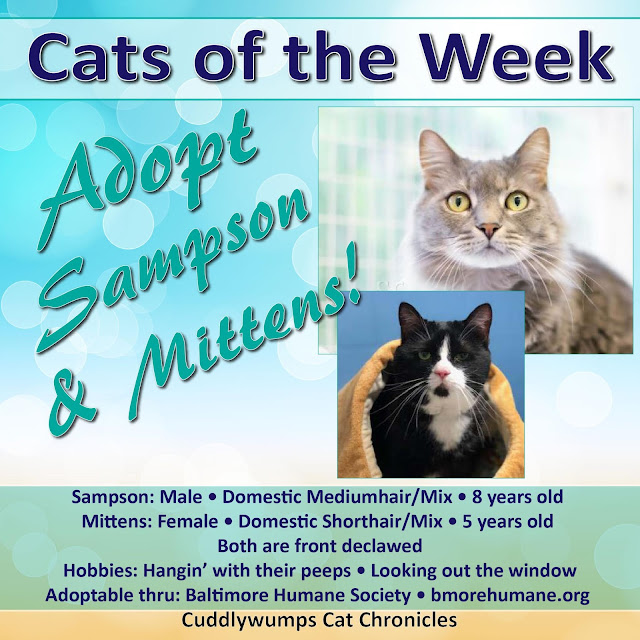 Adopt Sampson and Mittens