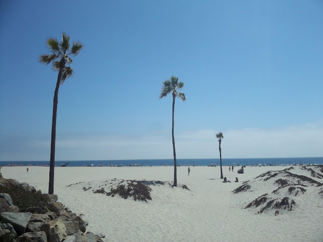 san diego-usa-voyages-plage-palmiers
