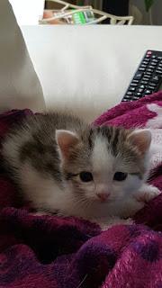 Mon chaton brestois 6%2Bjuin%2B7