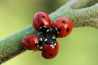 control biologico con fauna auxiliar