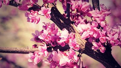 صور خلفيات زهور