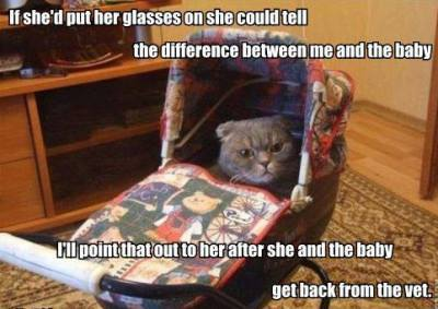 True Book Addict True To Books Catthursday Cats Say The