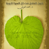 فنون التعامل في ظل السيرة النبوية PDF -  محمد العريفي