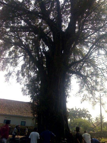 Pohon Preh masa lalu