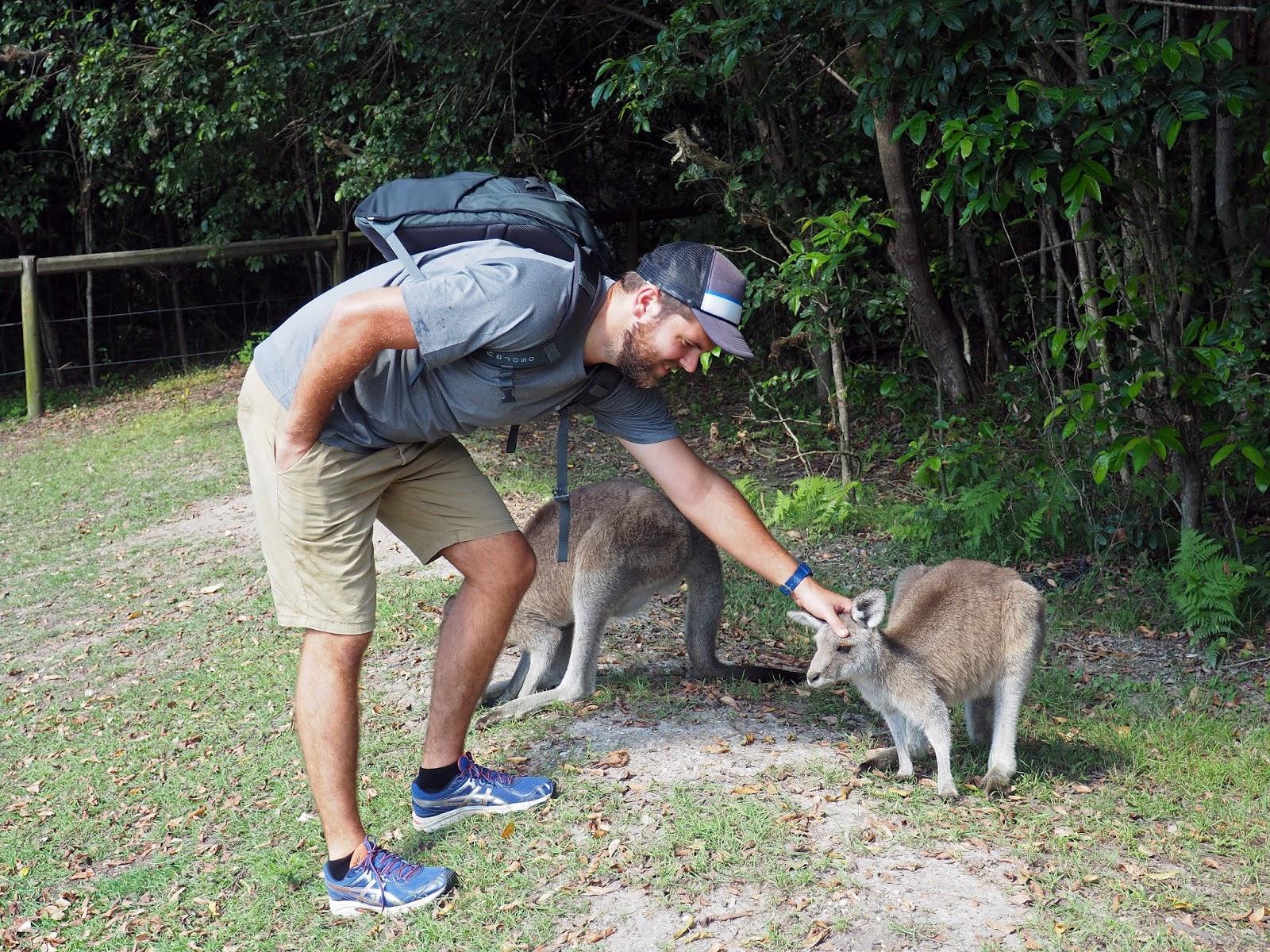 Male with Kangaroos at Diamond Head Campground