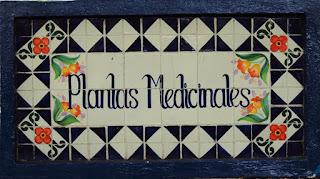 Las plantas medicinales, como  prepararlas y usarlas