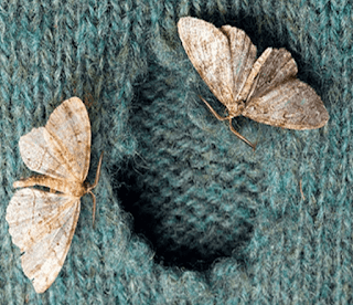 prevenir-las-polillas-en-la-ropa