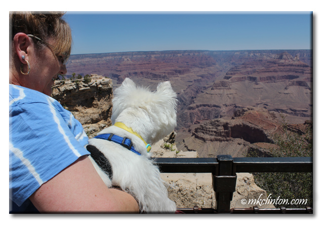 Westie looking over the fence at the Grand Canyon