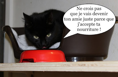 Une chatte noire qui mange en surveillant d'un oeil.