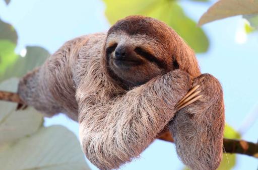 slothful definition hebrew