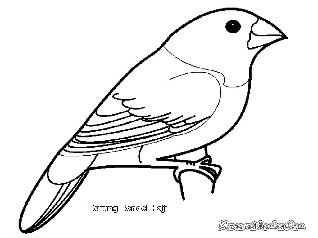 Mewarnai Gambar Burung Bangau Pewarna O
