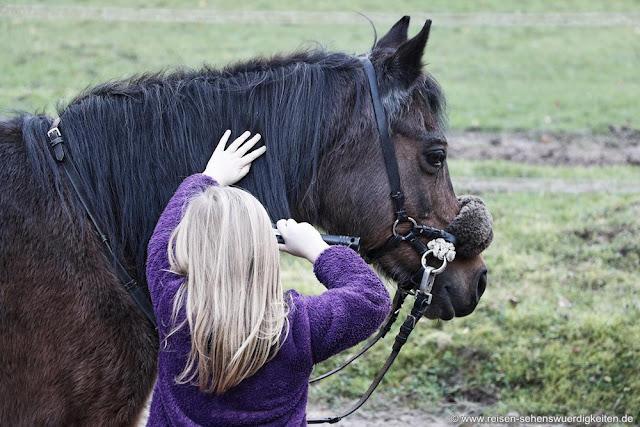 Umgang mit Pferden lernen, Reiturlaub Kinder