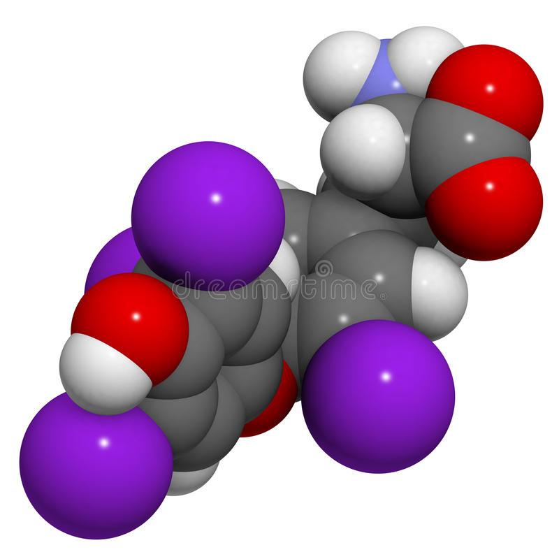 Diccionario De Biologia Qué Es Tiroxina