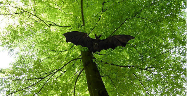 Image: Bat in a Tree, by Mnanni on Pixabay