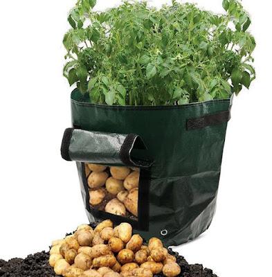 Potato Grow Bag
