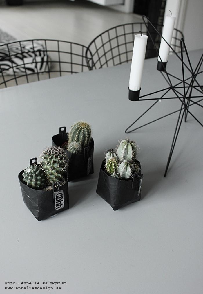 Oohh, kruka, krukor, kaktus, kaktusar, annelies design, webbutik, webbutiker, webshop, inredning, kök, unik design, interiör, interior, ljusstake, ljusstakar, svart och vitt, svartvit,