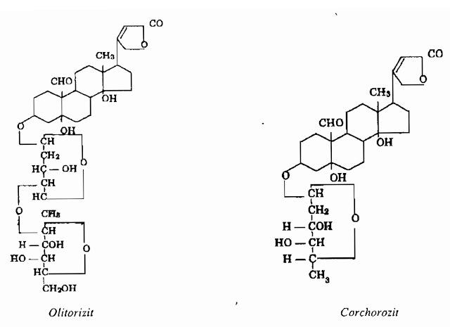 Thành phần hóa học Rau Day - Corchorus olitorius - Nguyên liệu làm thuốc Chữa Bệnh Tiêu Hóa