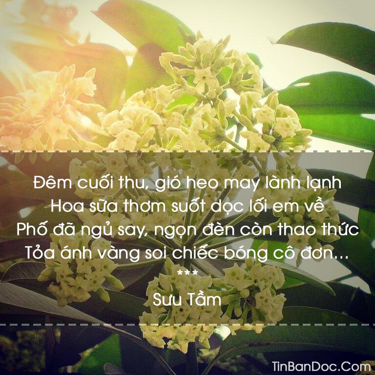 Thơ Hoa Sữa, 15+ Chùm Thơ & Bài Thơ Về Hoa Sữa Mùa Đông Hà Nội