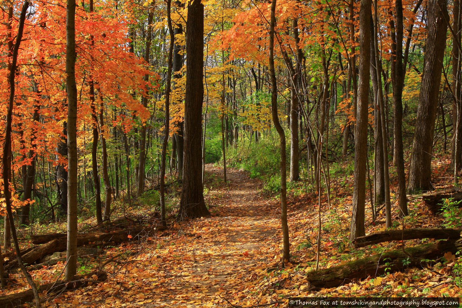 Free Fall Desktop Wallpaper Backgrounds Toms Hiking And Photography 11 3 2012 Fall Hiking Free