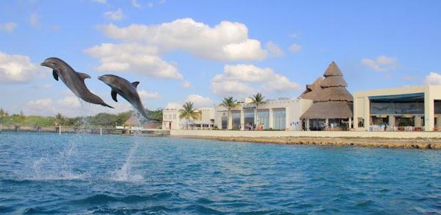 Nadar com os golfinhos em Cozumel no México