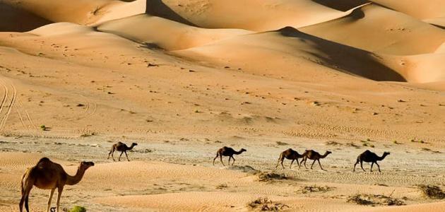 موضوع تعبير عن تعمير الصحراء 2020