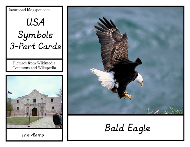 FREE 3-Part Cards for Safari Ltd USA Symbols Toob from In Our Pond