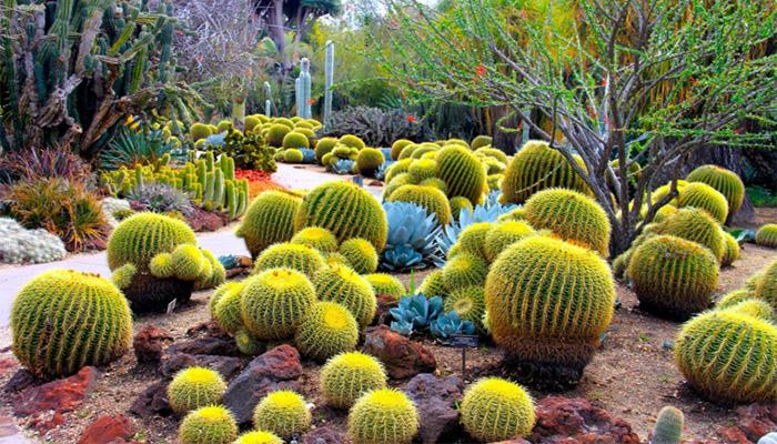 Cactus y jadineria