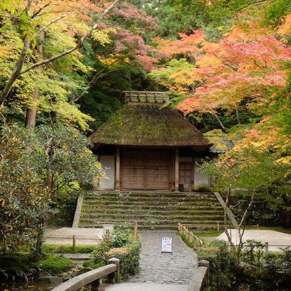 【京都】只為了看你這一眼-法然院