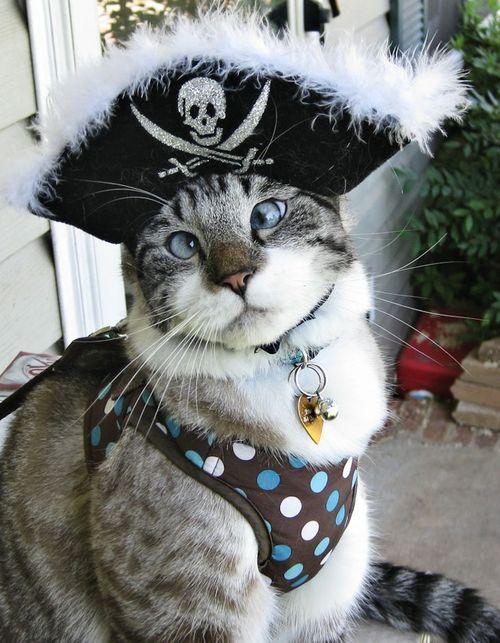gato-pirata.jpg