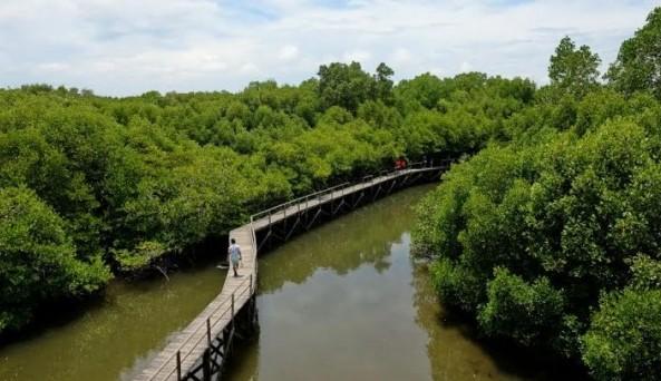 Pesona Keindahan Wisata Bedul Banyuwangi Jawa Timur Ihategreenjello
