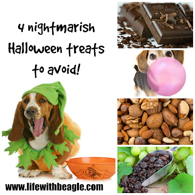 4 Halloween treats dogs shouldn't have: chocolate, nuts, xylitol and raisins