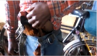 Man hide chicken in his trousers