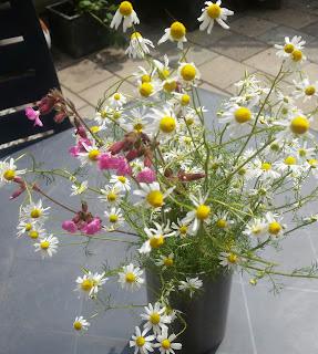 Gratis wilde bloemen