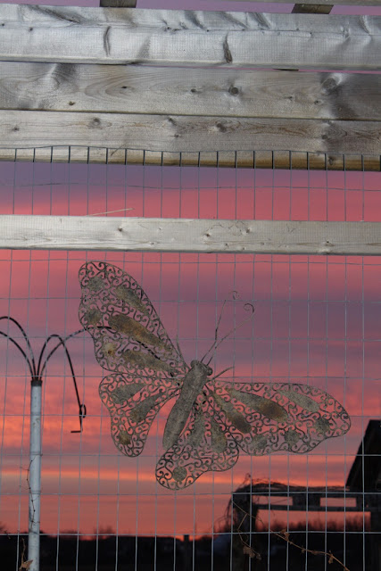 butterfly silhouette in sunrise