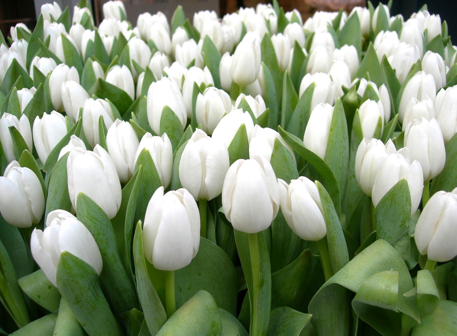 Pictures Of Beautiful And Beautiful Flowers