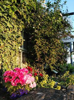 window, ivy, flowers