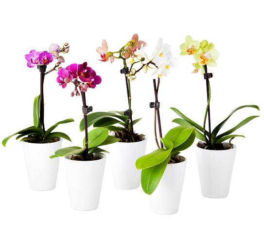 Cara Merawat Tanaman Bunga Anggrek Agar Tumbuh Subur dan Indah