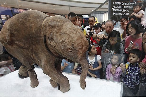 Baby woolly mammoth goes on display in Hong Kong