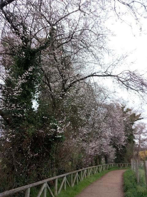 Árboles con flor rosa