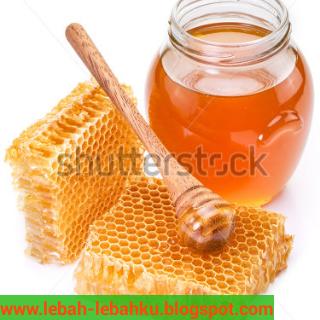 khasiat manfaat madu bagi kesehatan tubuh