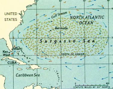 Gambar Laut Sargasso