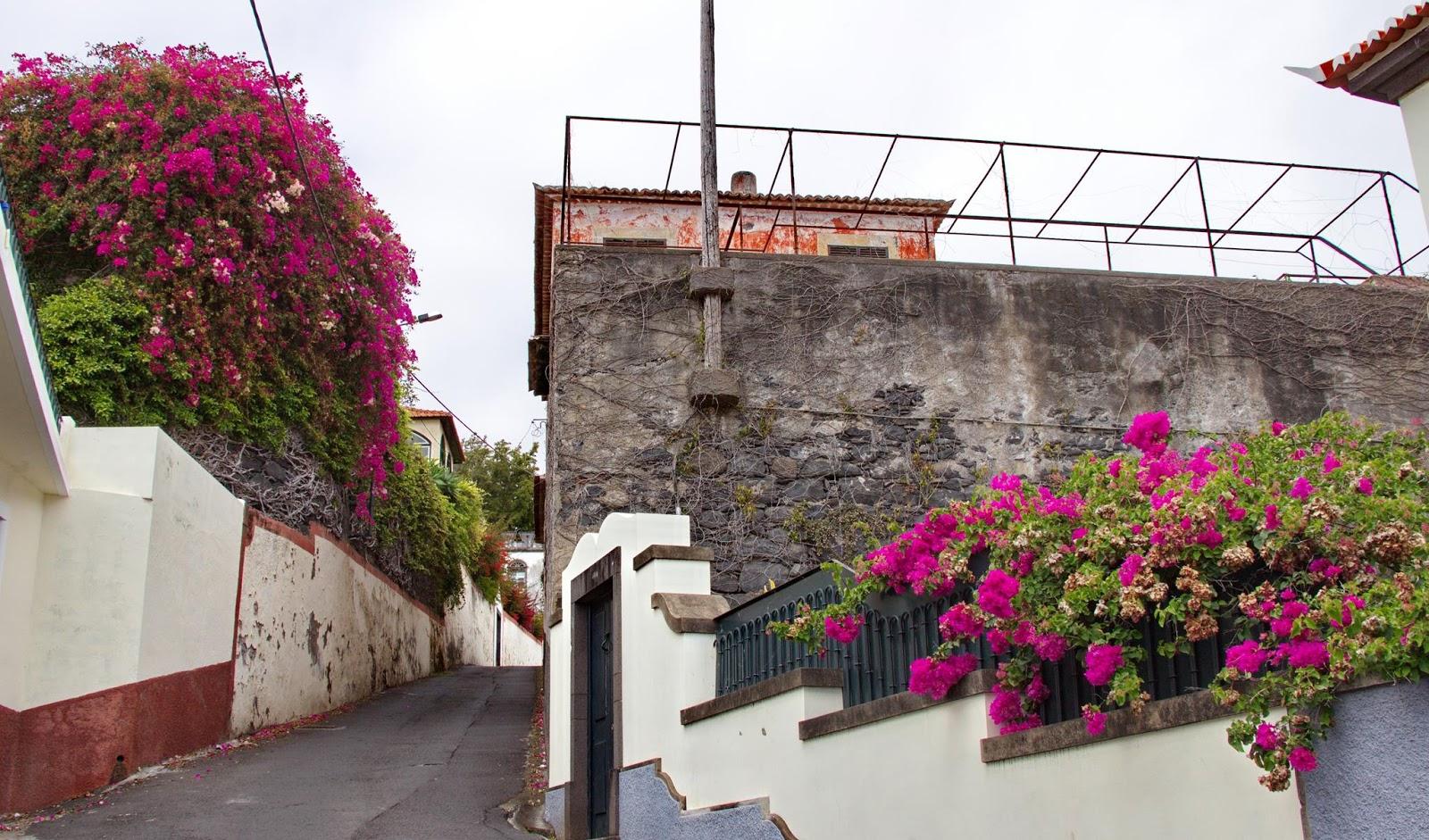 flores que pincelam a Rua da Torrinha